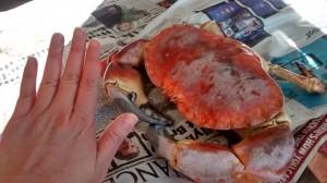portland crab